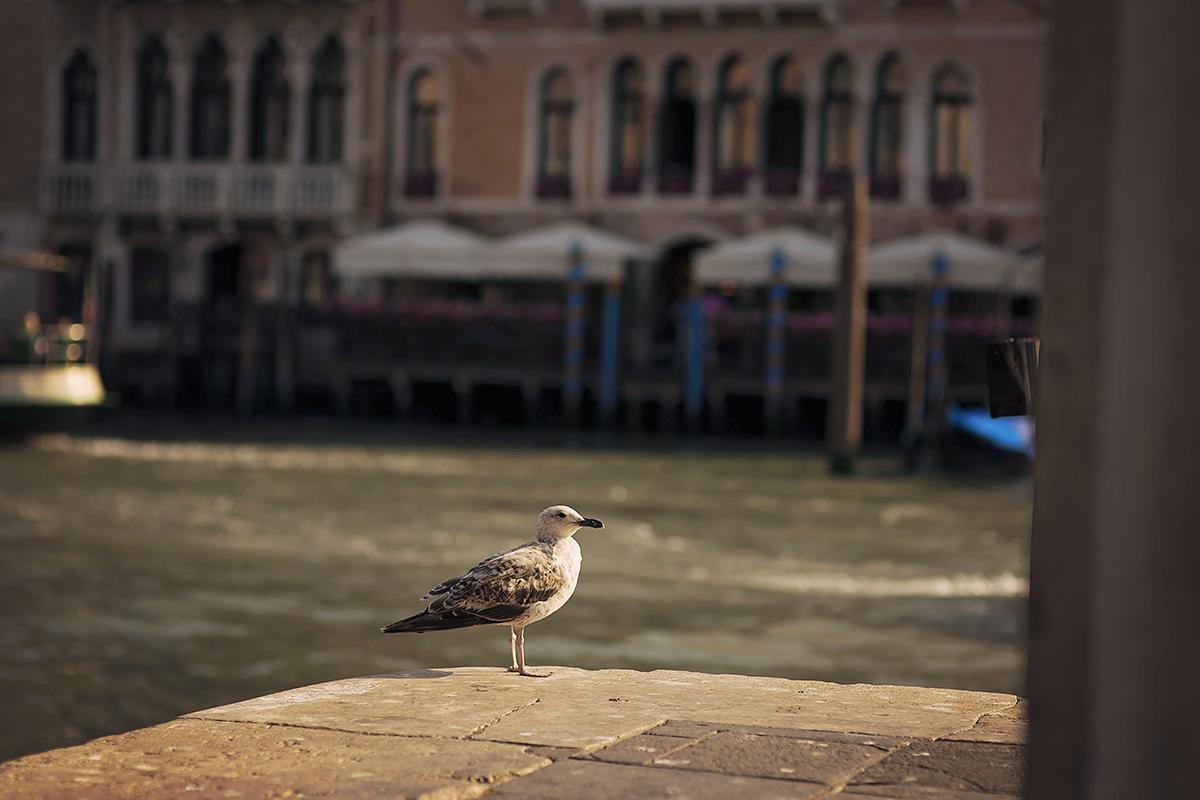 Plener ślubny w Wenecji_042