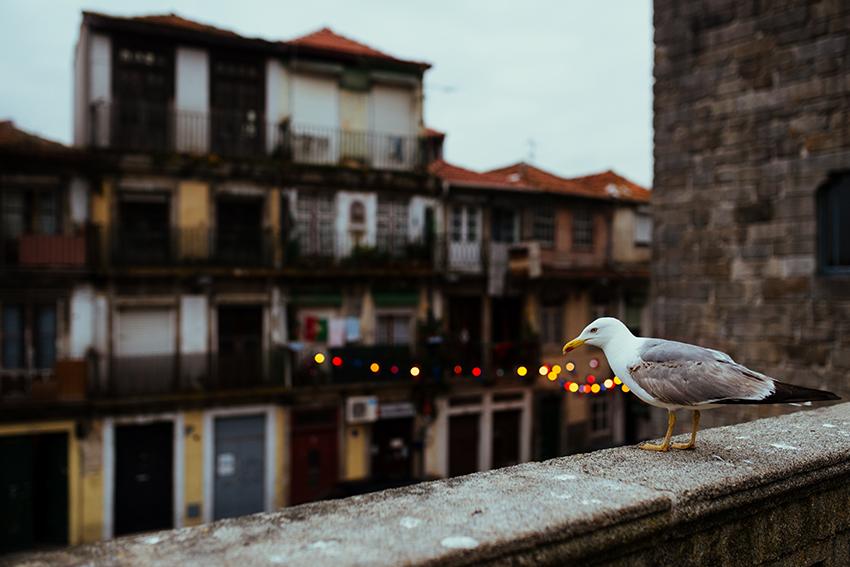 Porto _009